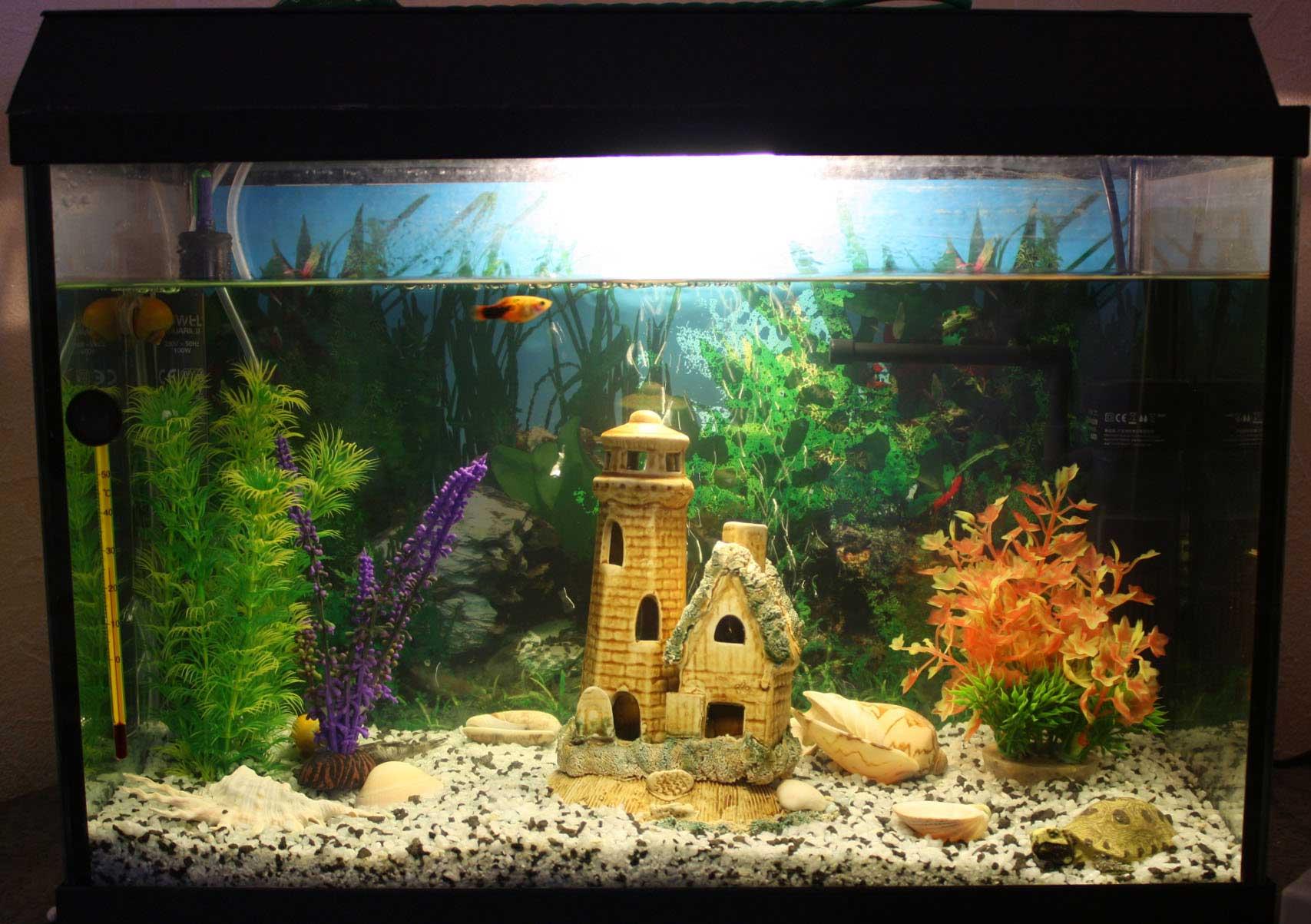 аквариуме грунт картинки в
