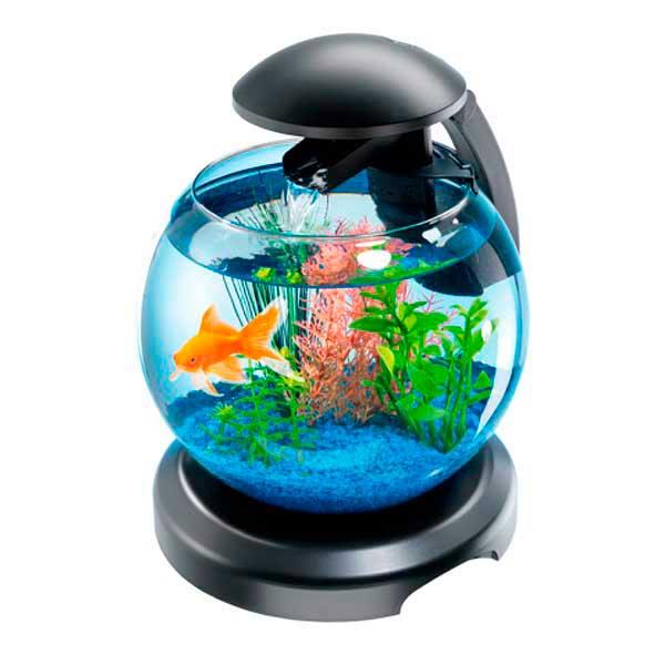 фото круглые аквариумы