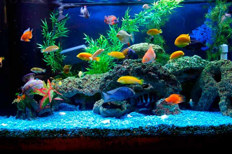 Воздух аквариуме с рыбками